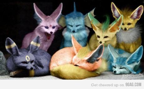 colored foxies: Gotta Catch, Pokemon, Fennec Fox, Real Life, Pokémon, Stuff, Catch On, Eevee Evolutions