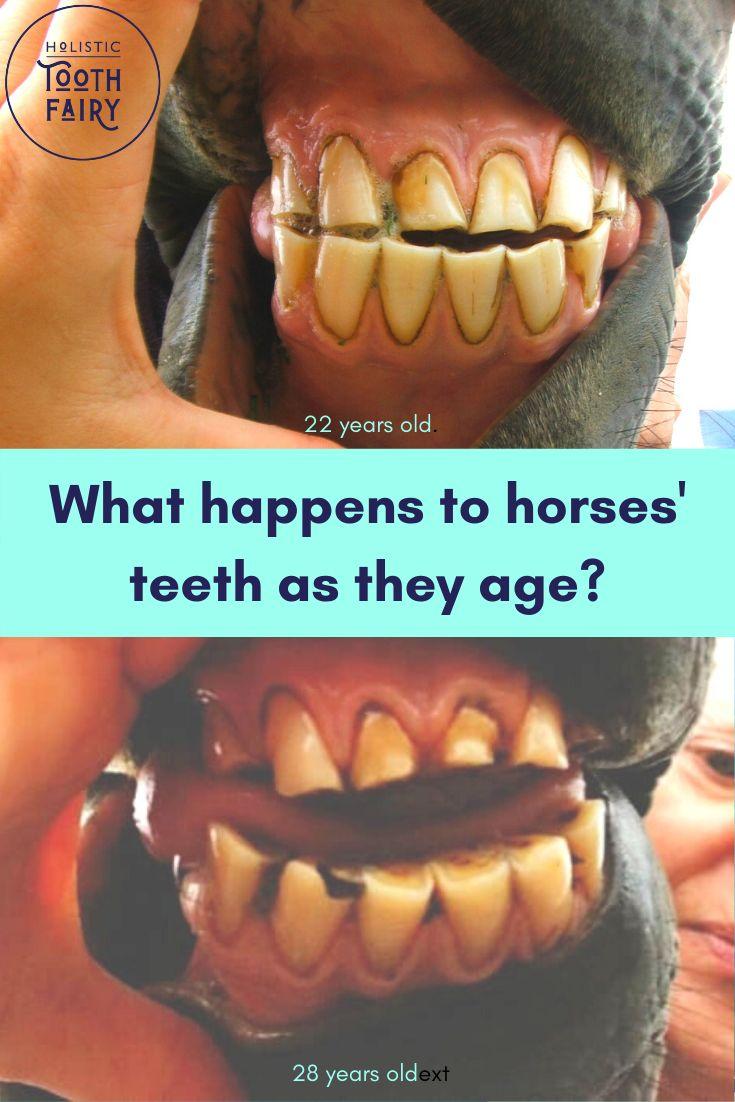 Horse teeth vs human teeth in 2021 human teeth cure