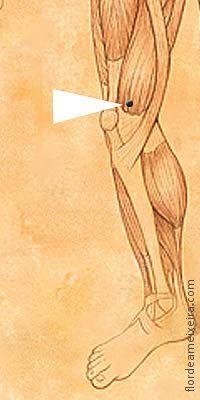 16. BP-10 / Mar de sangue (Xuehai) do Canal Baço (Pi) - Esfria o Sangue. Elimina o Vento. Regula a menstruação. Fortalece o Ying Qi. Indicações Menstruação irregular, dolorida, amenorreia, dismenorreia, metrorragia, menorragia, leucorreia, endometrite, orquite, neurite, anemia, urticária em decorrência do Vento ou da Umidade, dor na parte interna da coxa, prurido na pele, distensão abdominal, neurodermite, eczema, erisipela, alergia, artrite, artrite na articulação do joelho.