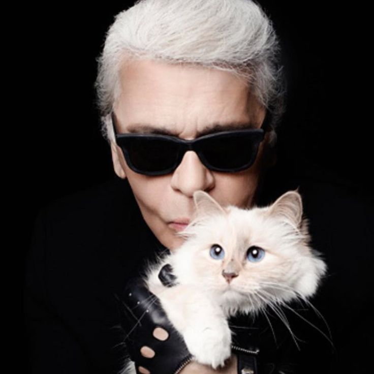 It's National Cat Day, See Our Favorite It Cats Here