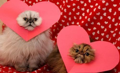 special V-Day surprise: Valentine'S Day, Cat, Friends, Cute Ideas, Valentines Gifts, Kittens, Valentines Cards, Valentines Day Cards, Animal