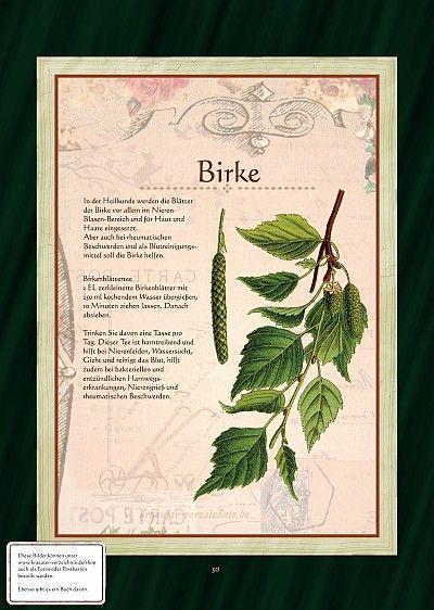 Alle Bilder aus dem Bilder-Buch Birke