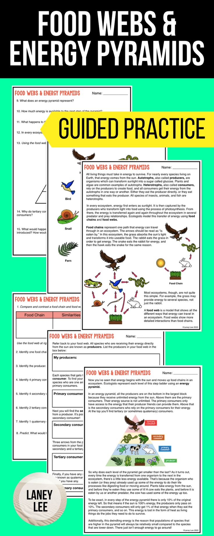 Food Chains, Food Webs, Energy Pyramids Guided Reading