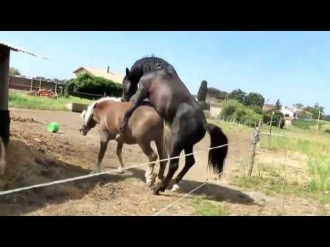 News Videos & more -  New Horse mating 2016 - Animals mating - Funny Animal, Funny Videos 2016 #4 #Music #Videos #News Check more at https://rockstarseo.ca/new-horse-mating-2016-animals-mating-funny-animal-funny-videos-2016-4/