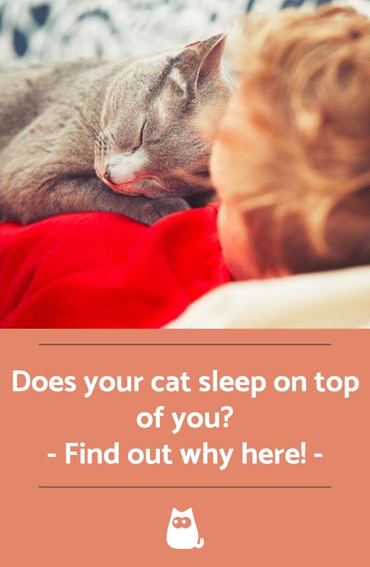 Why Do Cats Sleep On Top Of You Cat Sleeping Cats Cat Care