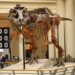 SUE the T. rex at The Field Museum Chicago, IL