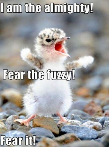 Funny pets with captions hilarious so true 29+ ideas