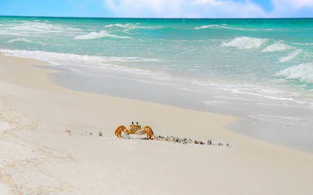 Prachtige zomerse dieren wallpaper met de zee en een krab op het strand