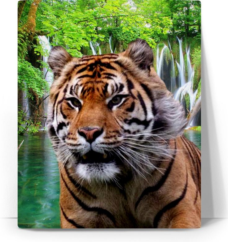 Check out my new product https://www.rageon.com/products/tiger-and-waterfall-art-canvas-print?aff=BWeX on RageOn!