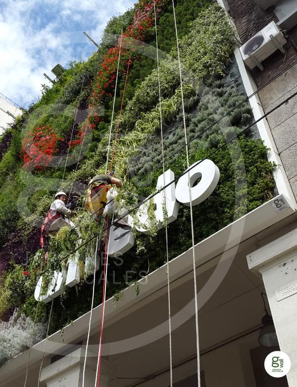 18 best images about vertical garden maintenance spain for Jardines verticales valencia