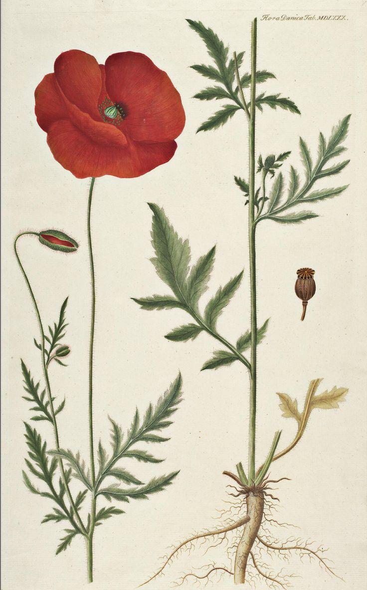 die besten 25 herbarium vorlage ideen auf pinterest keltische t towierung bedeutung. Black Bedroom Furniture Sets. Home Design Ideas