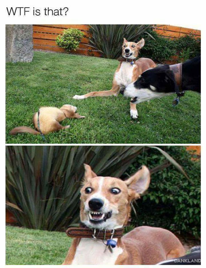 Funniest Animals of the Day that will Make You LOL - 22
