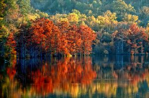Beautiful fall foliage reflects on the still waters located at Beavers Bend State Park in southeastern Oklahoma.