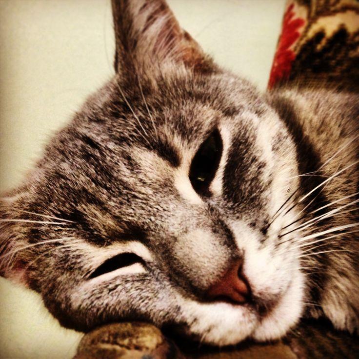 Flu'es'suz instagram instagram değildir