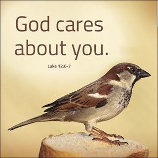 Image result for sparrows in bible passages