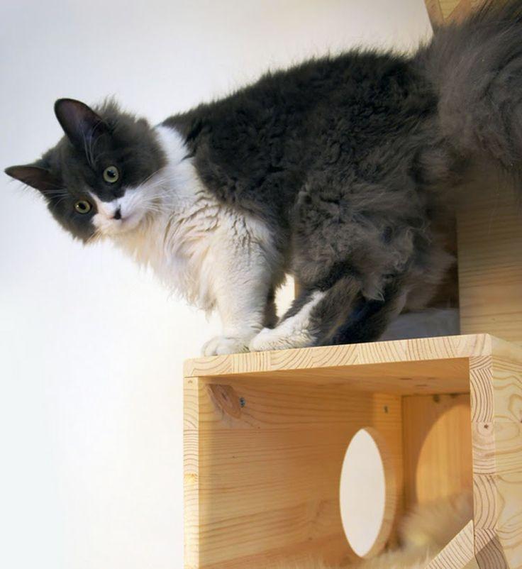 Catissa una casa modular para gatos cat - Fundas para unas de gato ...