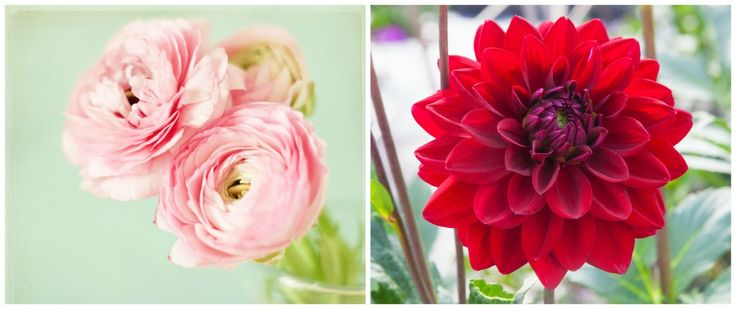 The Most Popular Flowers for Each Month of Spring  - HouseBeautiful.com