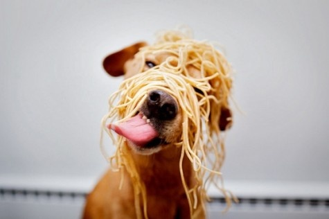 : Mail, Funny Dogs, Spaghetti, Noodles, Silly Dogs, Dinners, Puppys, Dogs Food, Animal
