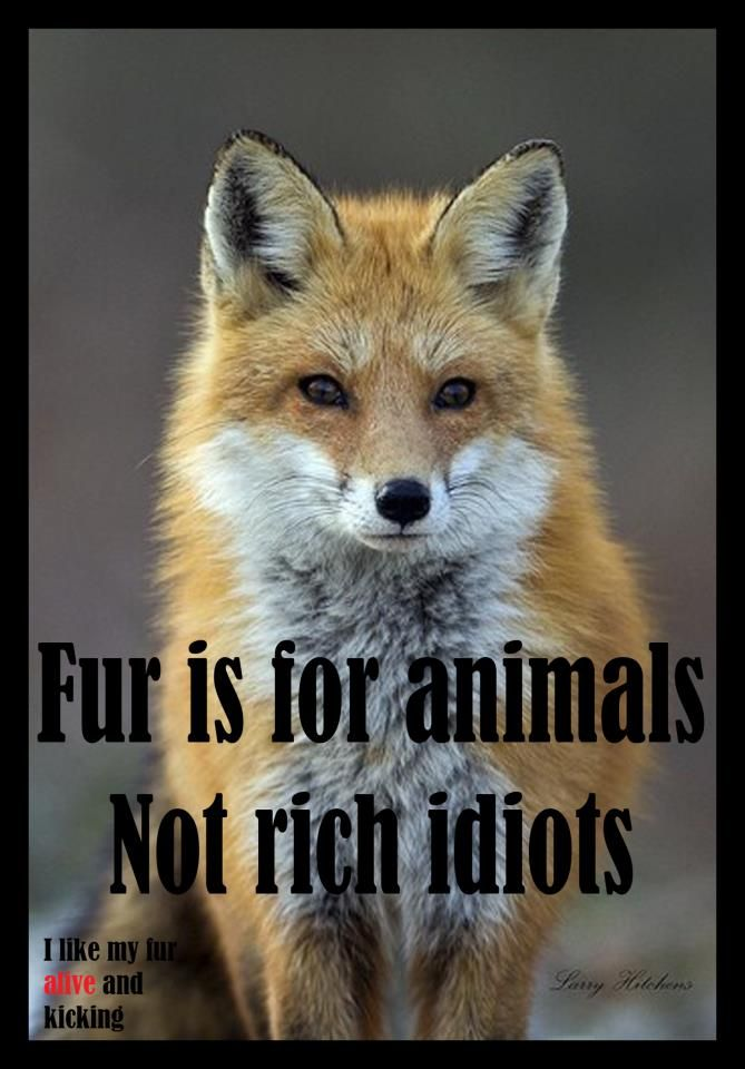 ...or even the idiots that buy fur trimmed in dog/cat fur that's cheap and comes over from China usually to many stores in the US