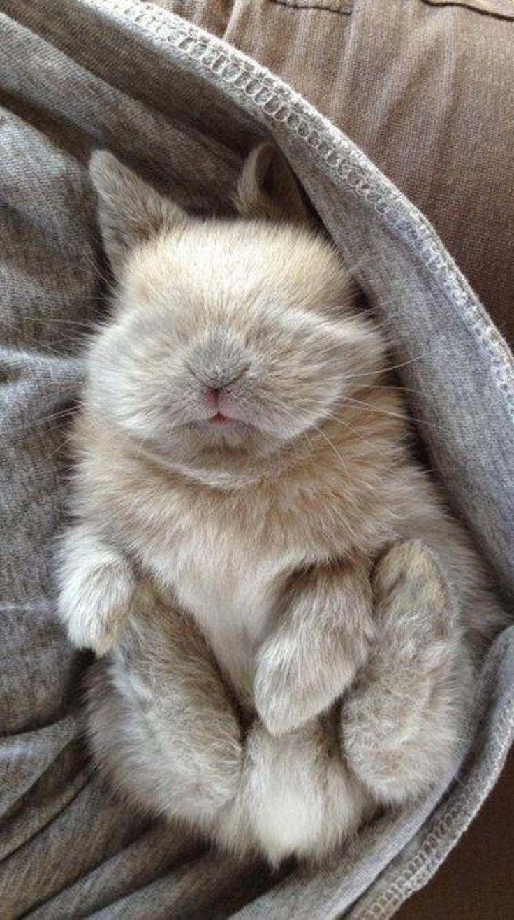Lui il as trouvé la solution....On peut toujours lui poser un lapin...Ça l'arrange...