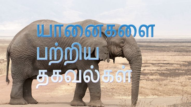 Surprisingly Information about elephants  in Tamil