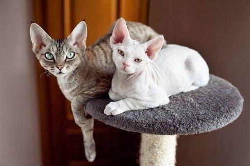 Drapaki dla kotów