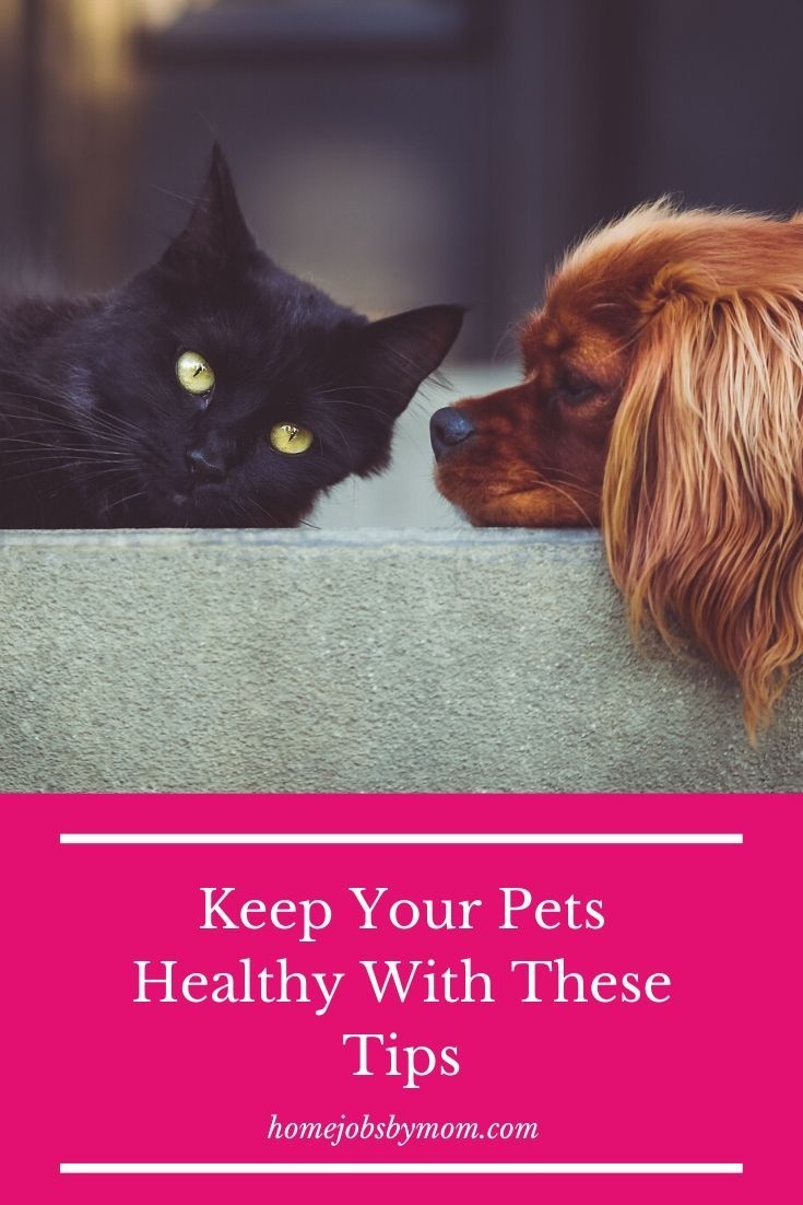Keep Your Pets Healthy With These Tips Pets Your Pet Animals