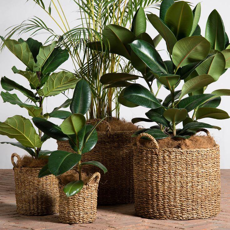 Natural colour is best! #plants #life #home #decor