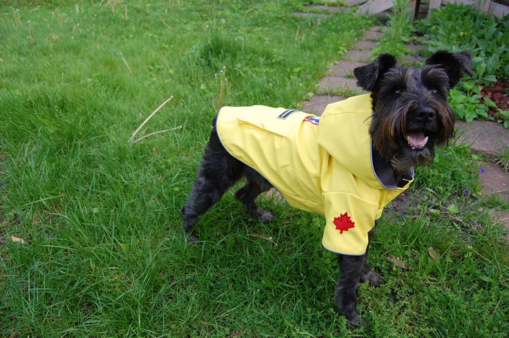 Canada Pooch Torrential Tracker Rain Jacket