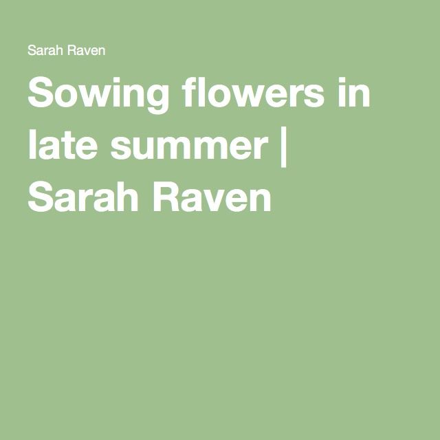 Sowing flowers in late summer | Sarah Raven