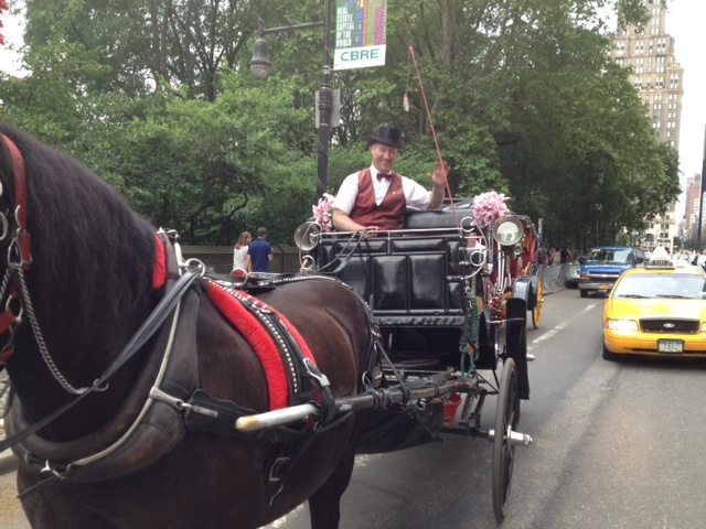 The Gary Baumgarten Report Move To Shut Down Central Park Horse