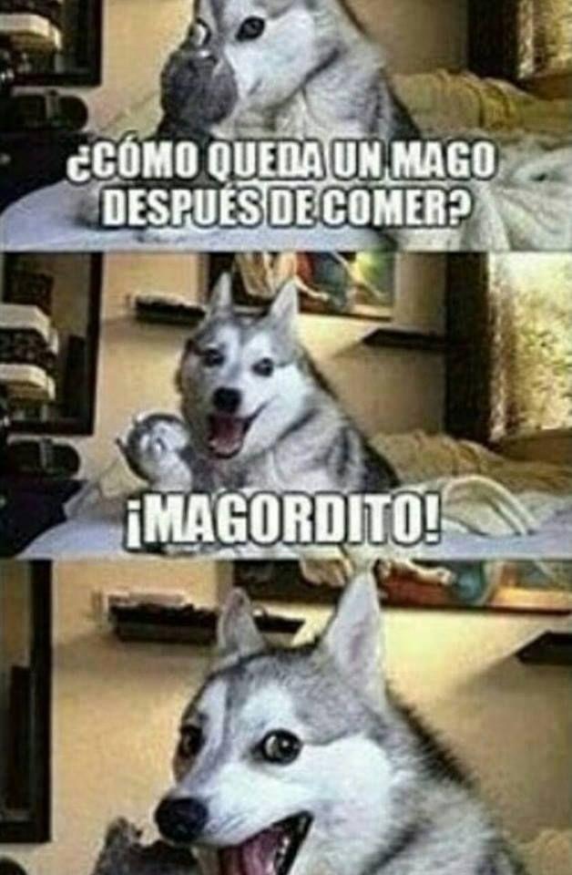 Recopilacion de memes del perro Husky