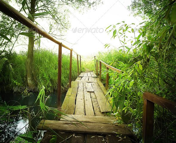Realistic Graphic DOWNLOAD (.ai, .psd) :: http://vector-graphic.de/pinterest-itmid-1006831339i.html ... Old wooden bridge ...  branch, bridge, foliage, forest, green, growth, image, leaf, long, lush, nature, nobody, outdoors, park, photography, plants, river, stem, stone, stream, tree, water, waterfall, woods  ... Realistic Photo Graphic Print Obejct Business Web Elements Illustration Design Templates ... DOWNLOAD :: http://vector-graphic.de/pinterest-itmid-1006831339i.html