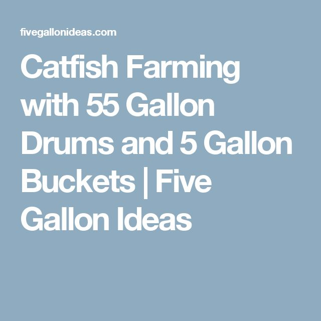 Catfish Farming with 55 Gallon Drums and 5 Gallon Buckets | Five Gallon Ideas