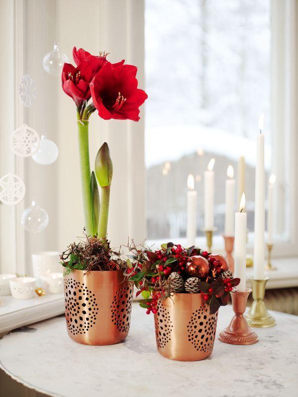 Amaryllis tillhör en av våra favoriter till julen.  amaryllis, blommor, jul