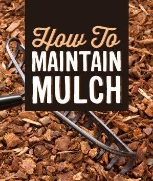 Mulch Maintenance - Infinity Lawn & Garden