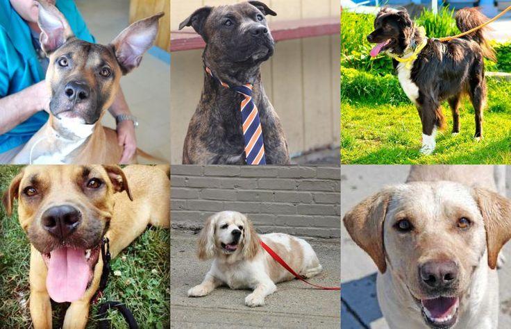 Platz 1 Mischlingshunde