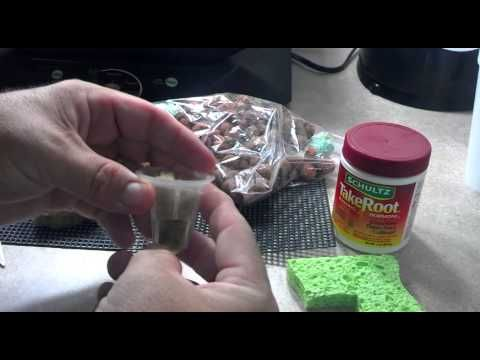 MAKE YOUR OWN AEROGARDEN SEED PODS!!!!!!! --NEW-- - YouTube