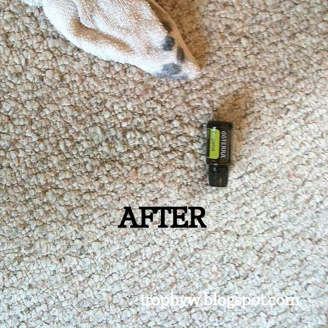 how to get oil out of carpet