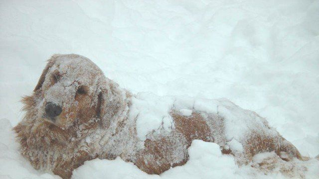 "Petition · City Council of Windsor, Ontario, Canada: Freezing Dogs Need Your Help! By-law needed to define precise ""harmful temperatures"" in which dogs cannot be left outdoors. · Change.org"