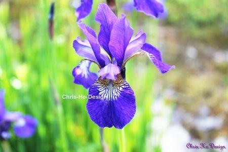 Iris Foto A4 str.