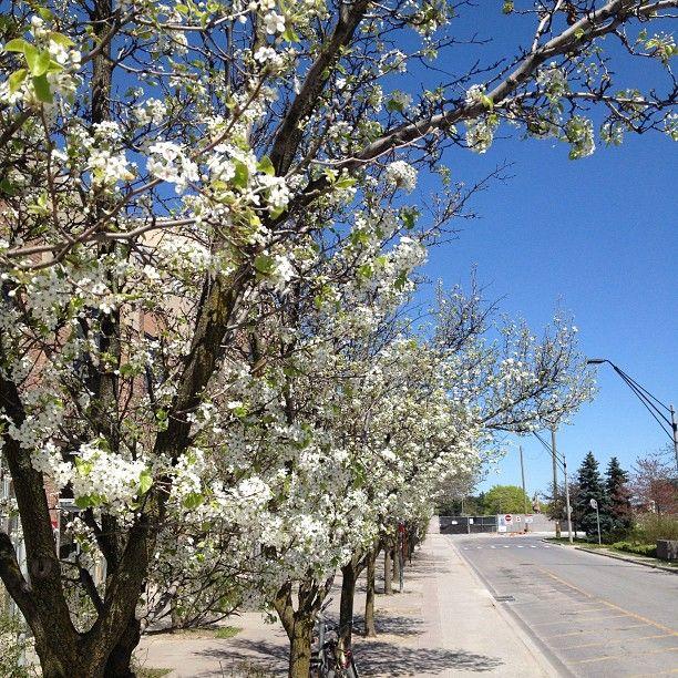 Spring at YorkU