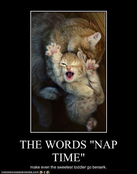LOL cat loveAnimal Kingdom, Funny Kittens, Baby Kittens, Cat Naps, Gingers Cat, Naps Time, Cat Stuff, Kitty, Bath Time