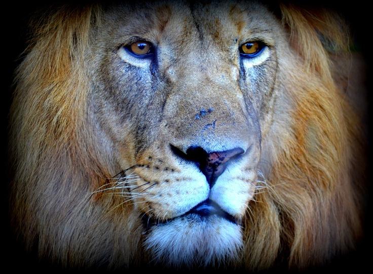 Look at his Eyes...A real King..