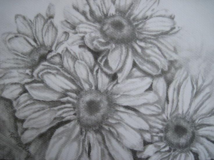 64 best images about Drawing on Pinterest | Feathers ...