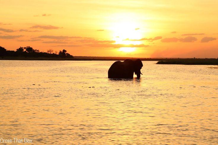 Elephant sunset in Botswana. Chobe. Africa.  http://crossthatbox.com