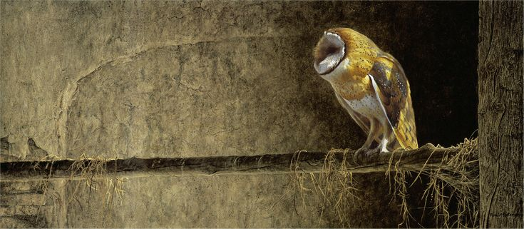 "Robert Bateman ""Catching the Light – Barn Owl"" 1988 https://www.flickr.com/photos/eoskins/22884292689/"