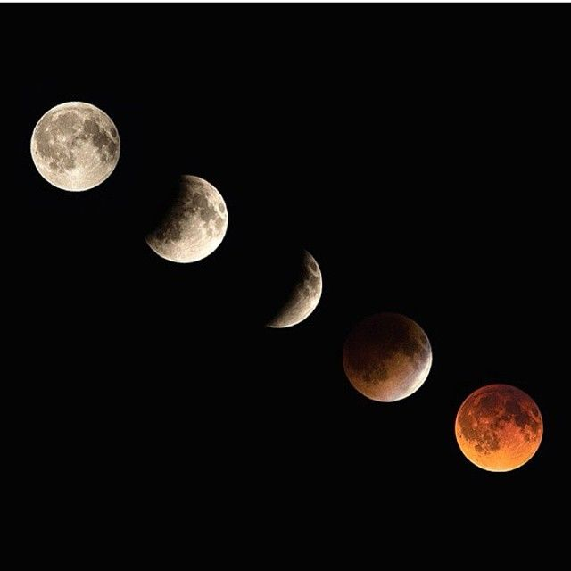 """2,248 отметок «Нравится», 49 комментариев — Nature Only (@natureonly) в Instagram: «""""Did you witness last nights """"Blood Moon"""" total lunar eclipse? ...If not, the next one is in April…»"""