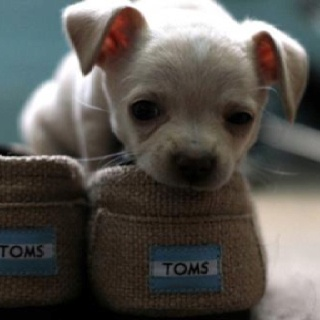 Kijiji Lexington Ky Pets - Home Design Ideas
