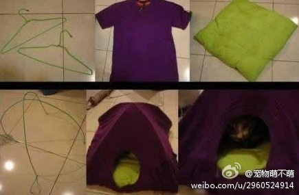 Diy Cat Tent Using 2 Cloth Hanger And An Old T Shirt